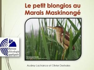 MaraisBlongios