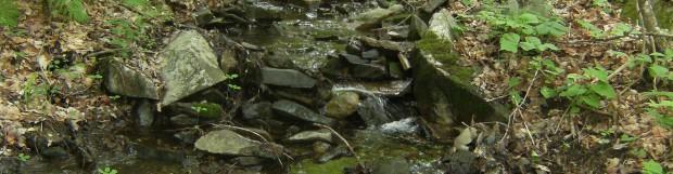 Projet d'aménagement intégré de la forêt du ruisseau Bernier : on réfléchi à la protection des habitats fauniques sensibles