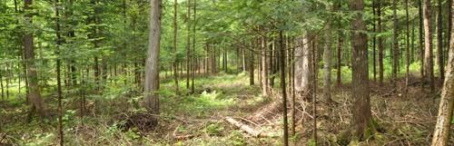 ANNULÉ – Rendez-vous sur la forêt au GLSF