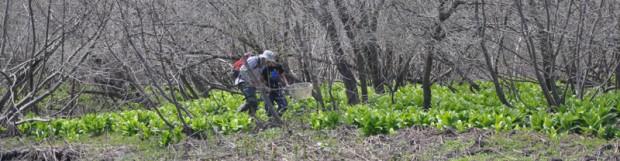 Le COGESAF dépose un plan de protection pour la tortue des bois