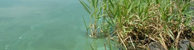 Appel de propositions – projets de lutte aux cyanobactéries