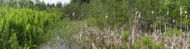 L'intégration des habitats fauniques dans la vallée de la rivière Tomifobia