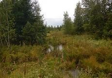 Le plus important projet de cartographie détaillée des milieux humides de l'Estrie est lancé
