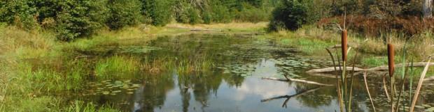 Caractérisation des milieux humides de la rivière Tomifobia