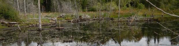 Cartographie détaillée des milieux humides phase I