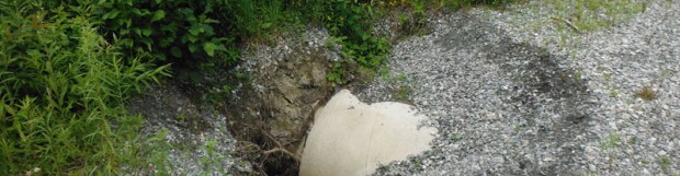 Amélioration des infrastructures dans l'habitat de la tortue des bois, rivière Tomifobia