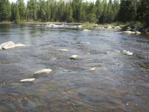 Rivière Felton, aval de la frayère
